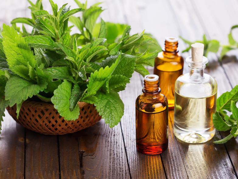 Beneficiile uleiului esential de menta